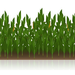 lawn with corn with reflection