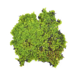 moss on white background