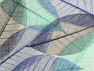 Keuken foto achterwand Texturen Blue mulberry leaves skeletons
