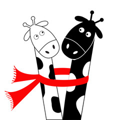Cute cartoon black white giraffe wearing red scarf. Boy girl couple. Camelopard on date. Long neck. Funny character set. Happy family. Love greeting card. Flat design. Isolated.