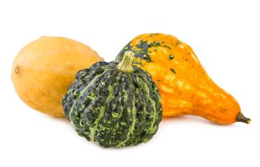 pumpkins decorative colorful various gourds ornamental assorted