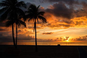 Scenic silhouettes of palm trees at sunset