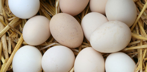 eggs of hen in the basket of the farm