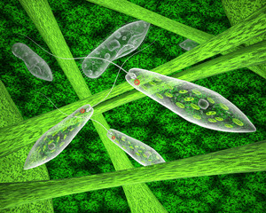 Euglena green and ciliate in the natural environment. 3d illustration