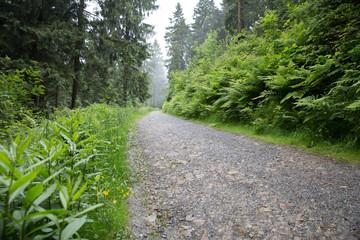 Auf dem Liebesbankweg im Harz