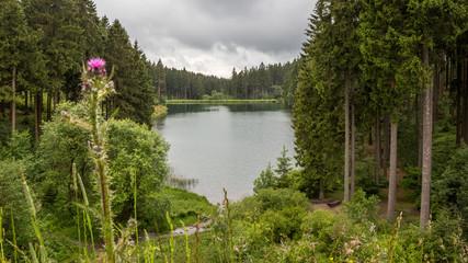 Mittlerer Grumbacher Teich am Liebesbankweg im Harz