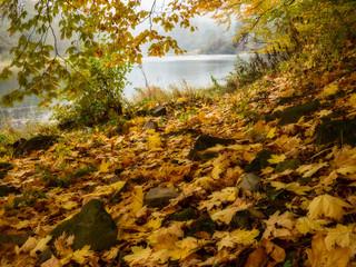 Autumn foggy landscape with fallen leaves