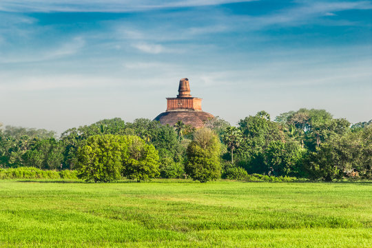 View of the Jetavan Dagoba in the forest at Anuradhapura city, S
