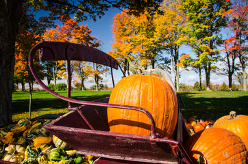 large orange pumpkin sitting in old wagon with colorful autumn trees in background