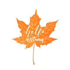 Hand drawn lettering of a phrase Hello Autumn. Vector illustration isolated on white. Shape of maple leaf. Creative design elements. Cartoon style