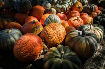 large pile of a variety of colorful pumpkins and squashes
