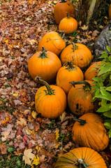 Pile of bright orange pumpkins on colorful autumn leaves
