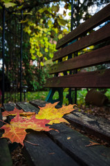 orange and yellow maple leaves on park bench