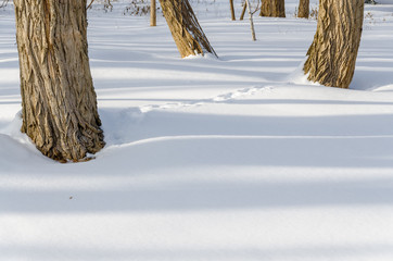 tree trunks casting shadows on snow