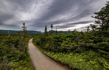 boardwalk hiking path through marsh to Western Brook Pond
