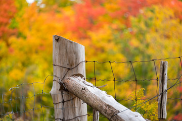 old fence post with autumn trees in background