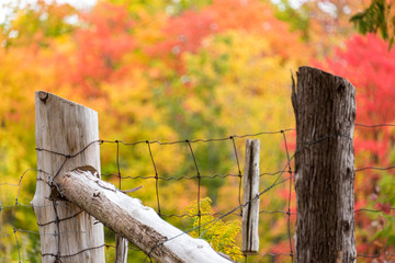 old wood and wire fence with with autumn trees