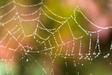 dew-covered spider web with fall color in background