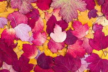 Background from autumn colourful leaves