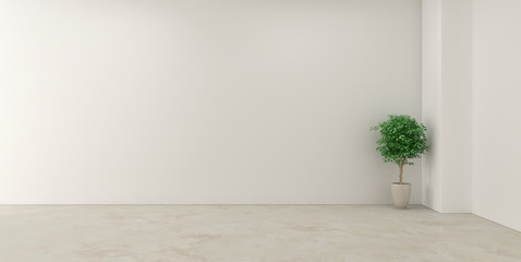Empty white room and flower