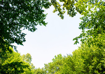 Photo of a big gap among trees in a green forest