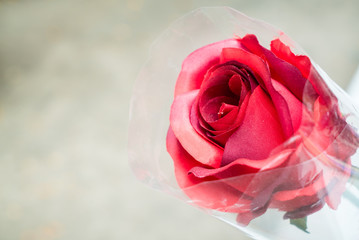 Bouquet of rose with copy space