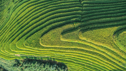 Aerial view of green terrace rice fields, China