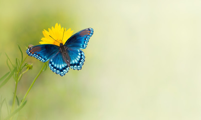 Blue butterfly on yellow flower - a business card background design