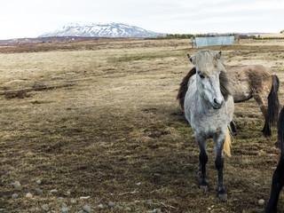 Pony on a field