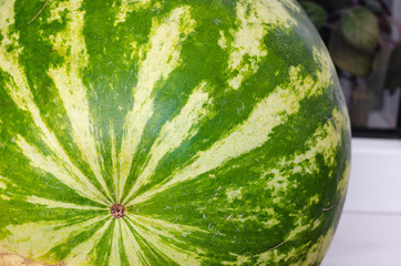 texture of green and yellow peel of watermelon round back side closeup.