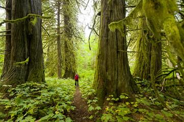 A young woman hiking in Snootli Creek Regional Park, Bella Coola, British Columbia