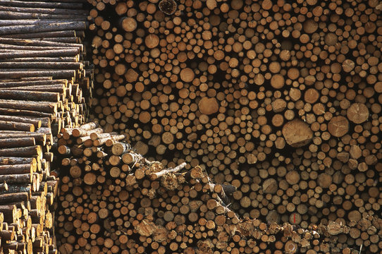 Pulp wood stacked in processing yard, British Columbia, Canada.