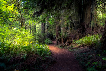Wall Mural - Forest Path