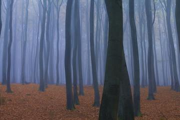 Forest in Fog in Autumn, near Frankfurt, Germany