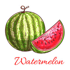 Watermelon fruit with juicy slice sketch