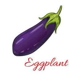 Sketched eggplant or aubergine vegetable