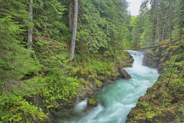 The Little Qualicum Rivers and its aquamarine coloured water flows through a deep narrow gorge. Little Qualicum Falls Provinical Park, British Columbia.