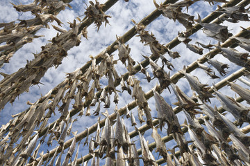 Outdoor fish drying rack, Iceland