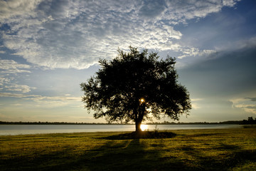 Siluate Tree with sunrise is the wonderful natural gem for the natural lovers and travelers in Thailand.