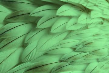 Green fluffy feather closeup