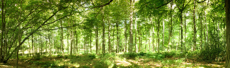 Woods in summer with light through green leaves