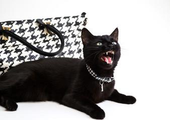 fashionable cat, stylish handbag