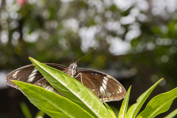 Beautiful butterfly  in nature