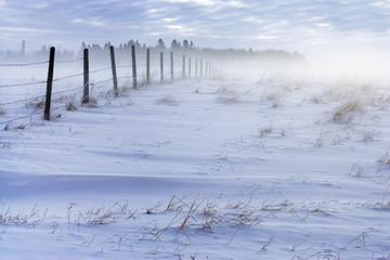 Trees and fence and pasture in fog, Water Valley, Alberta, Canada.