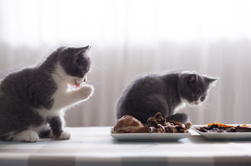 Kitten and food, taken indoors