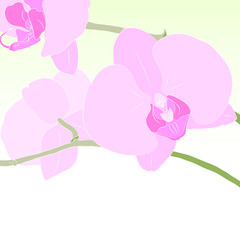 Illustration in gentle tones with flowers orchid phalaenopsis.