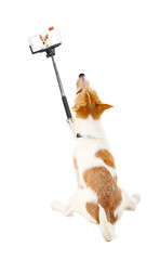 Funny puppy taking selfie on white background.