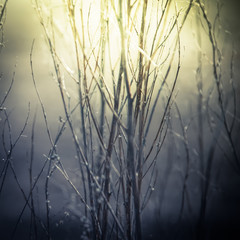 Abstract nature background in vintage style wild flowers and plants silhouettes at foggy mysterious sunrise. Early morning over the meadow at misty autumn. Blur effect