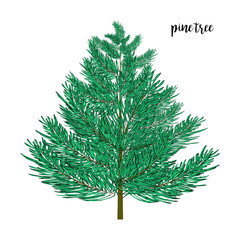 Pine tree isolated on wite. Vector illustration.