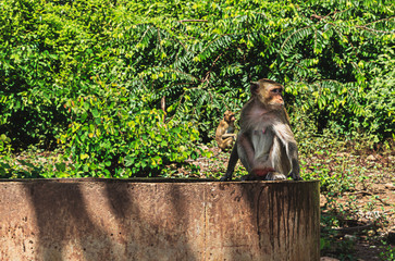 Monkey sitting on a cement pond